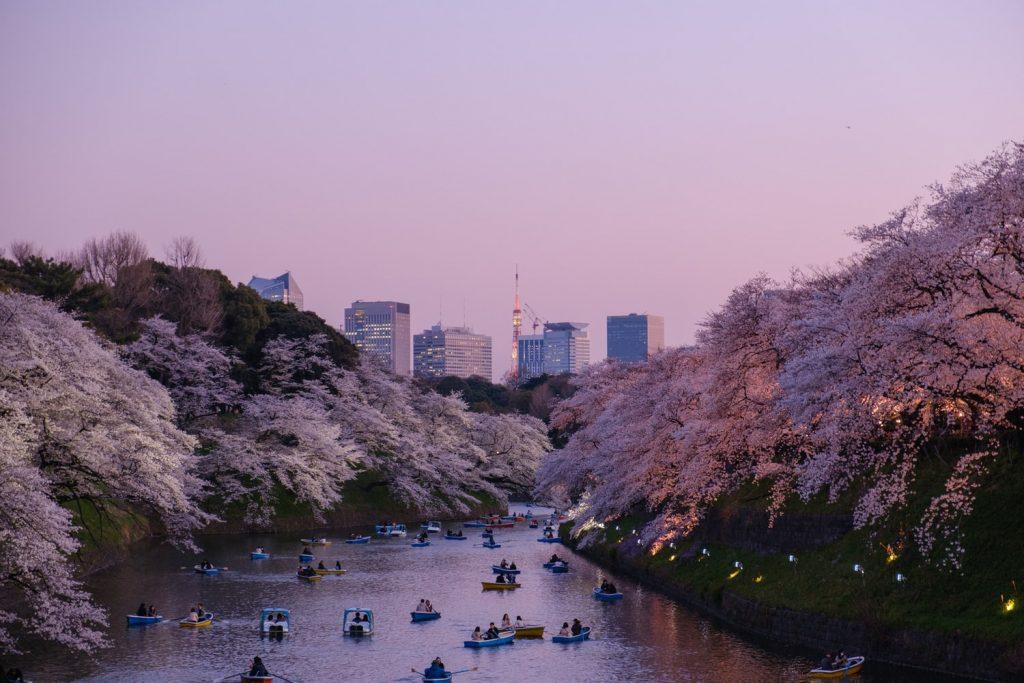 Kyoto Kirschblüte Fluss Ausblick