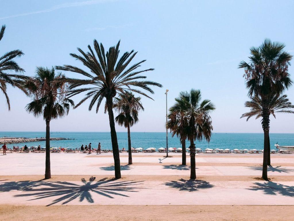 Barcelona Spanien Promenade Palmen 1024x768