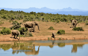 Südafrika Max Safari