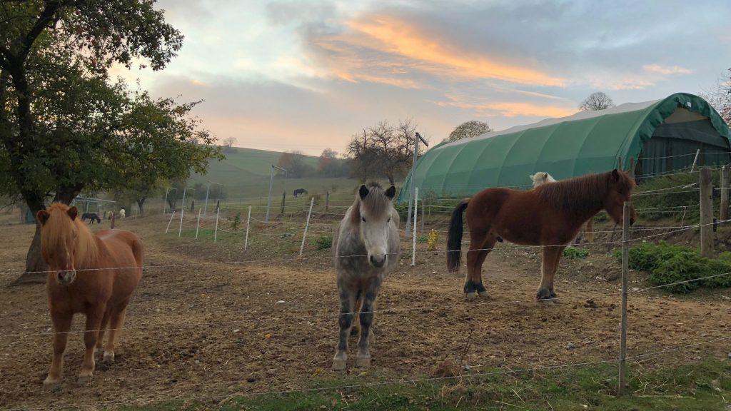 Pferde Schwarzwald